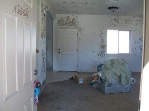 salt lake city mold removal, utah mold remediation